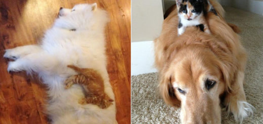 Featured-Dog-Pillows