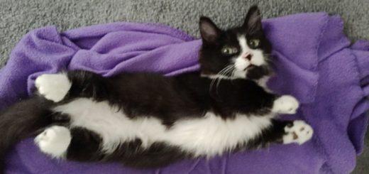 Featured-Feral-Kitten-FB