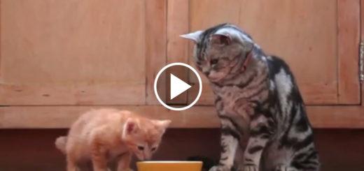 Featured-Dear-Kitten-FB