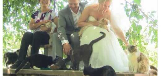 purrfect-wedding-feature