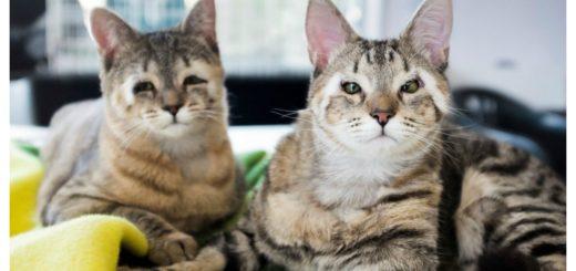 eyelid-kitties-feature