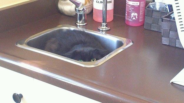 hiding-vet-cat-03