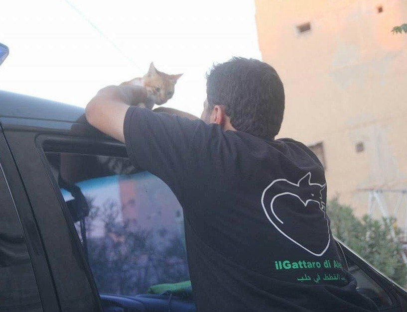 aleppo-cat-man-03