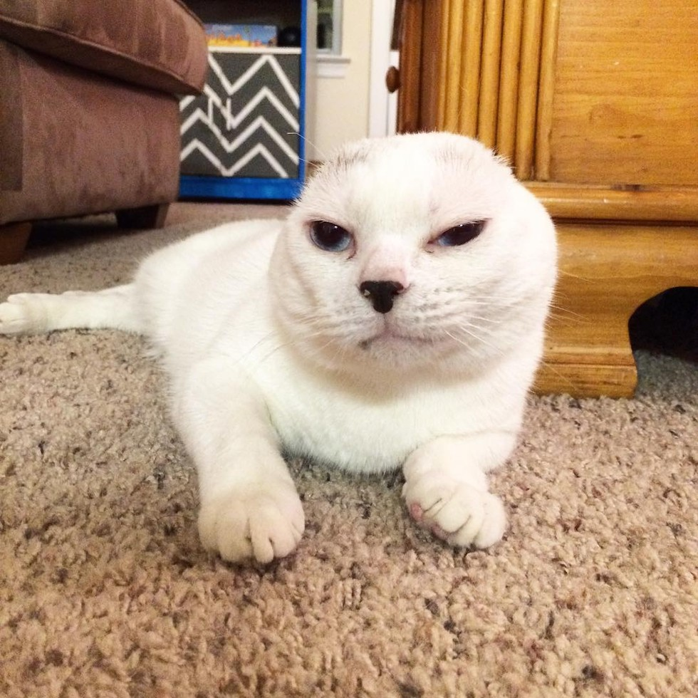 earless-cat-03