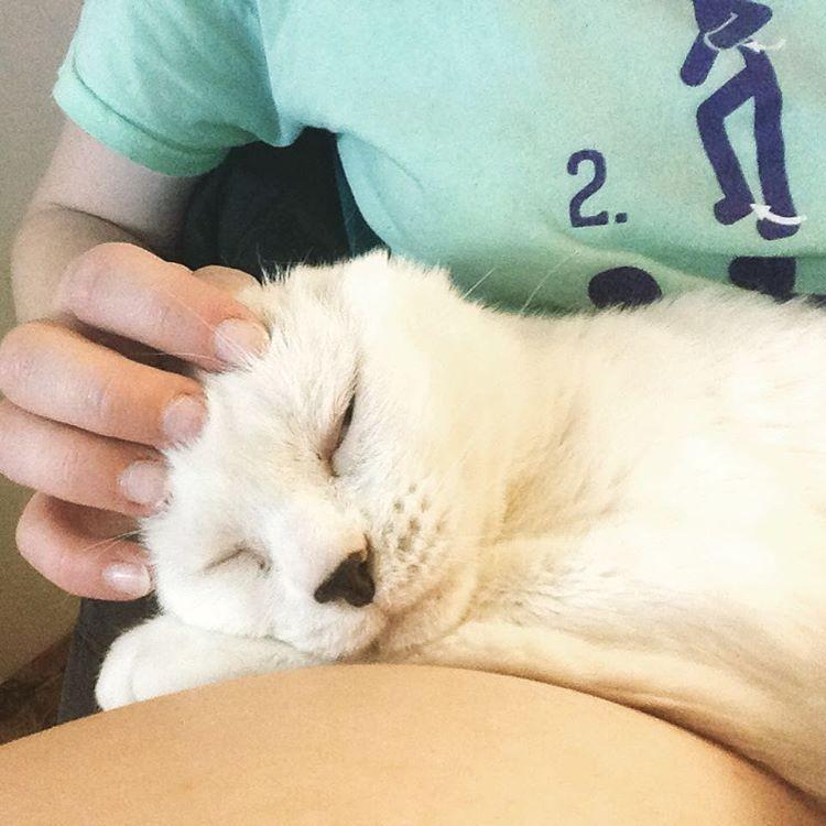 earless-cat-10