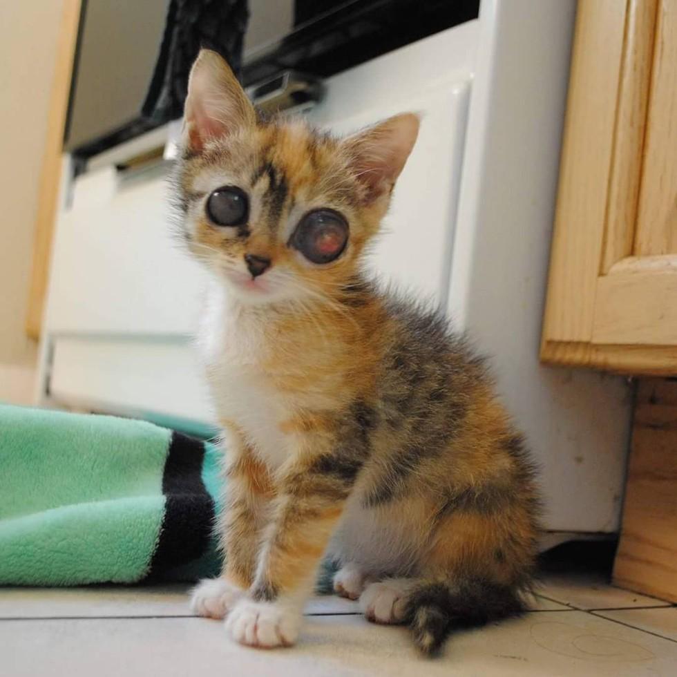 frog-eye-kitty-02