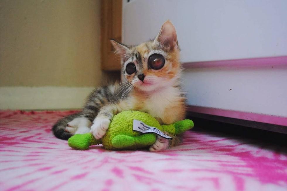 frog-eye-kitty-04