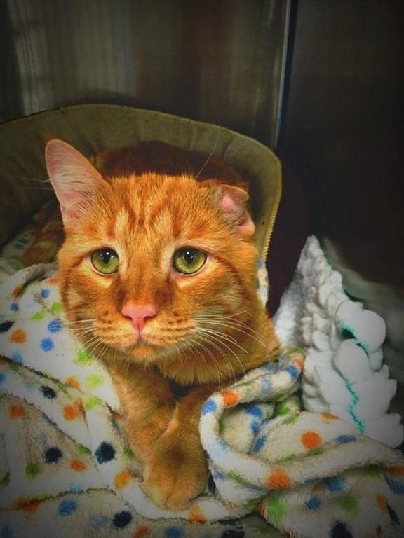 sad-kitty-adopt-04