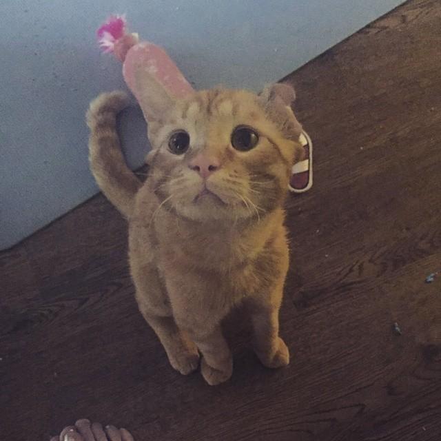 sad-kitty-adopt-07