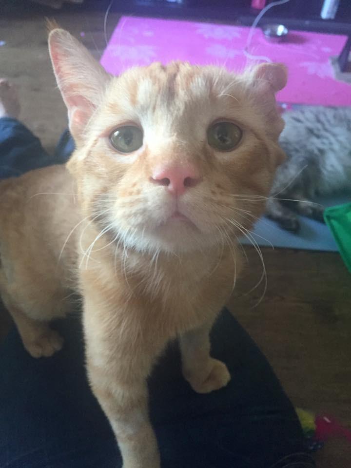 sad-kitty-adopt-09