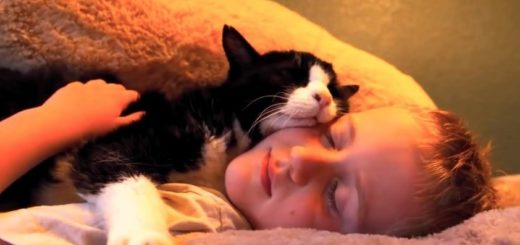 featured-family-adopted-20-year-old-cat-fb