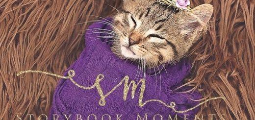 featured-newborn-cat-photoshoot-fb