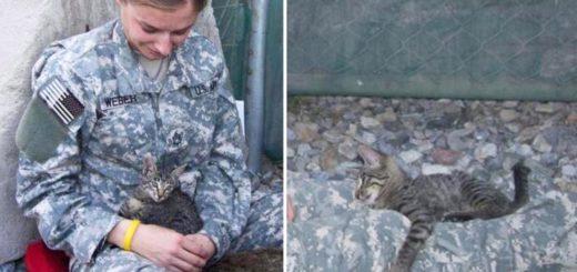featured-soldier-sick-kitten-fb