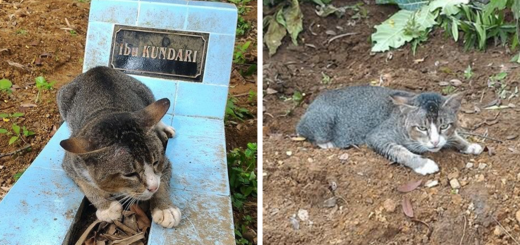featuredgrieving-cat-spends-year-owner-grave-fb