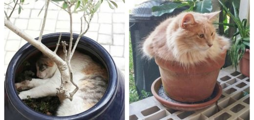 cat-plants-feature