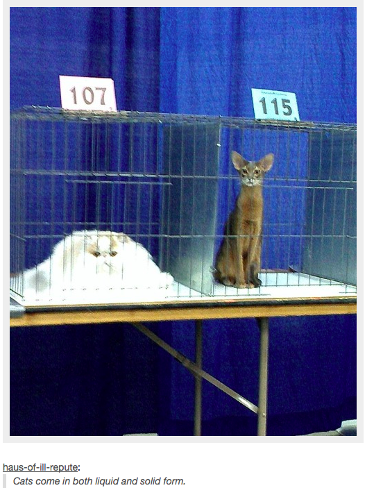 deserving-cats-04