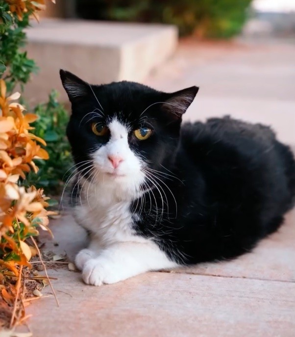 family-adopted-20-year-old-cat-7