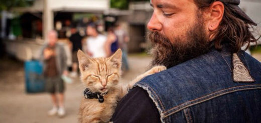 featured-biker-cat-fb