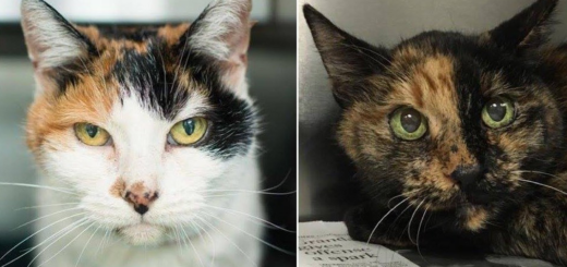 featured-couple-adots-21-year-old-bonded-cats-fb