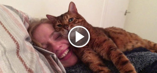 Featured-Cat-Approves-New-Girlfriend-FB