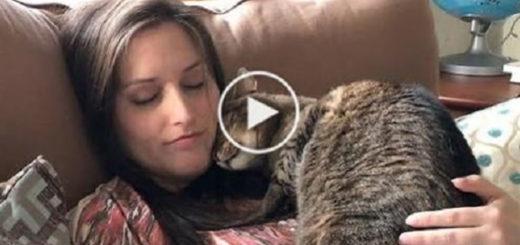 Featured-Cat-Human-Pregnant-FB