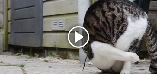 Featured-Cat-Somersaults-FB