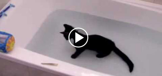 Featured-Kitty-Loves-Water-FB