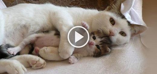 Featured-Mama-Cat-FB