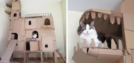 featured-cardboard-ark-structure-cat-prefabcat-fb