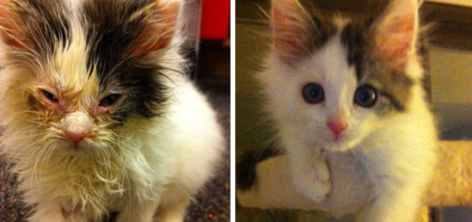 Featured-rescue-cat-abandoned-before-after-fb