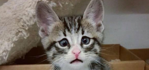 Featured-worried-kitty-FB