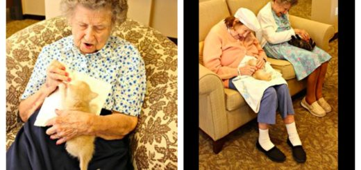 assisted-living-cat-feature-ro
