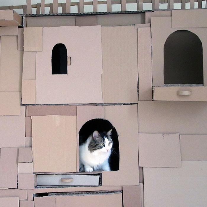 cardboard-ark-structure-cat-4