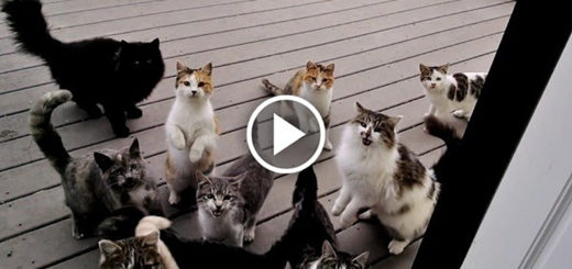 Featured-Chorus-of-Cats-FB