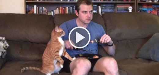 Featured-Eating-With-Cats-FB