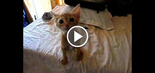 Featured-Homeless-Kitten-Meal-Reaction-FB