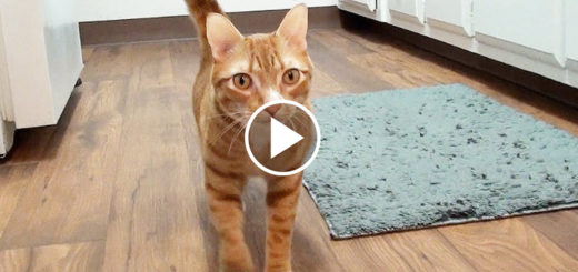 Featured-How-Cats-Love-You-FB