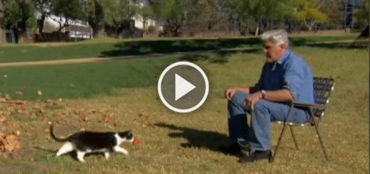 Featured-Jay-Leno-Proves-Cats-FB