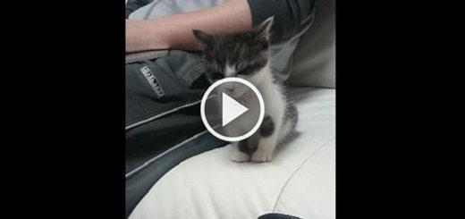 Featured-Kitten-Doesnt-Sleep-Alone-FB