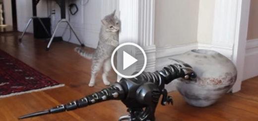Featured-Kitten-Meets-Dino-FB