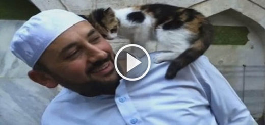 Featured-Stray-Cats-Mosque-FB