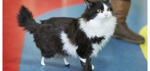bionic-kitty-feature