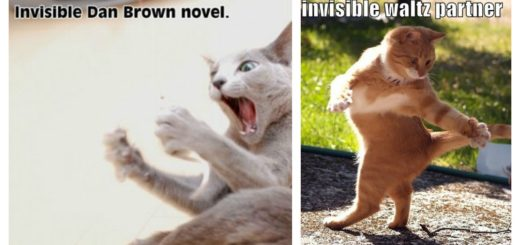 invisible-cat-feature