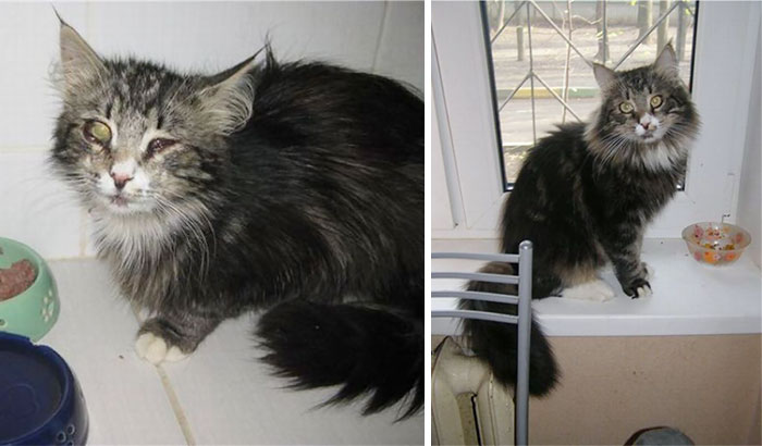 rescue-cat-before-after-07