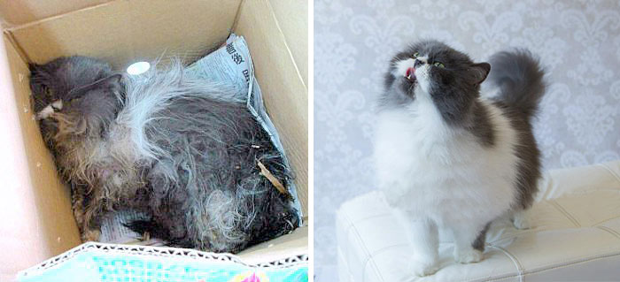 rescue-cat-before-after-08