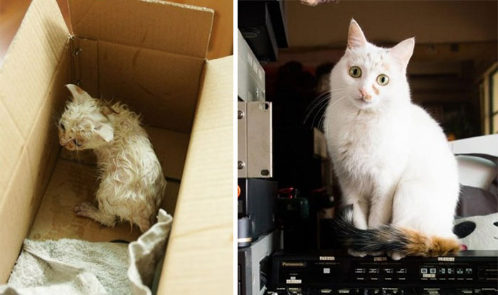 rescue-cat-before-after-09