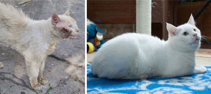 rescue-cat-before-after-10