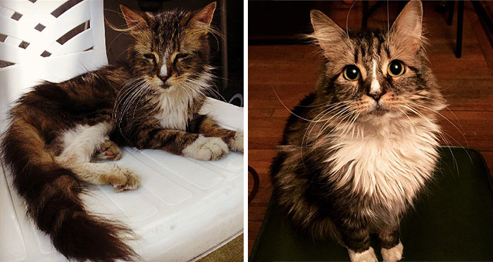 rescue-cat-before-after-12