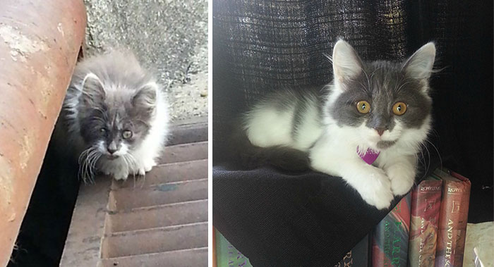 rescue-cat-before-after-14