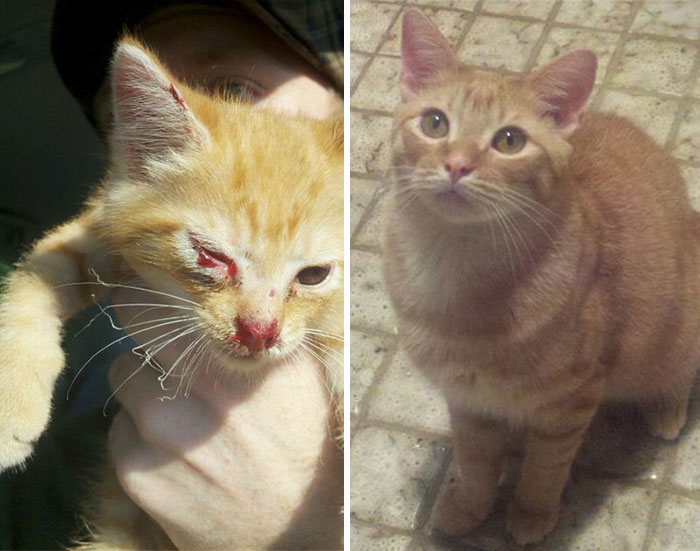 rescue-cat-before-after-15